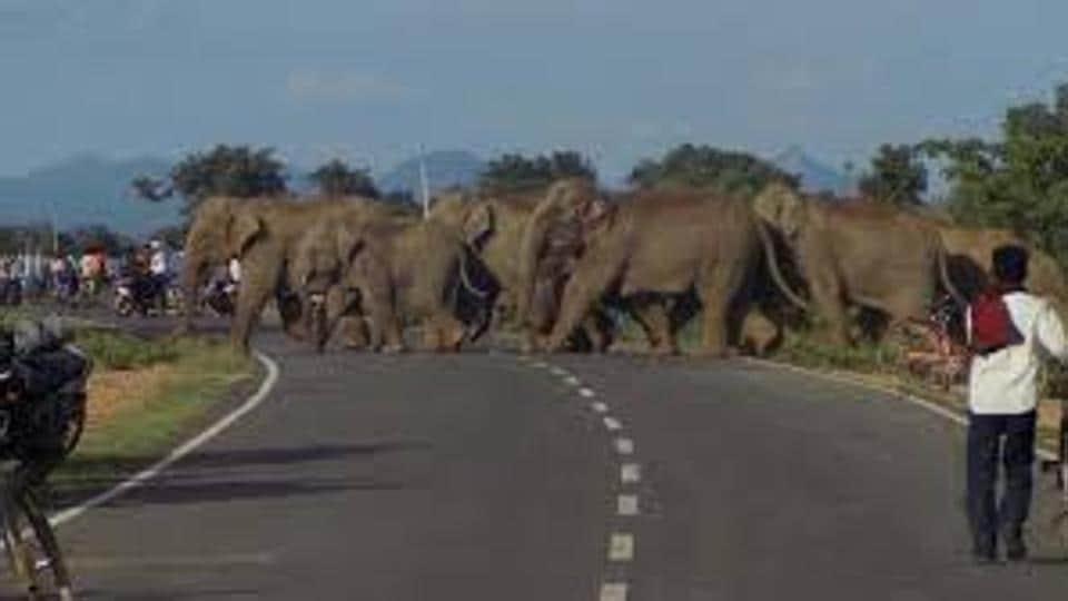 Representational picture. The 168-km Alipurduar-New Jalpaiguri rail track has mowed down more than 65 elephants since 2004.