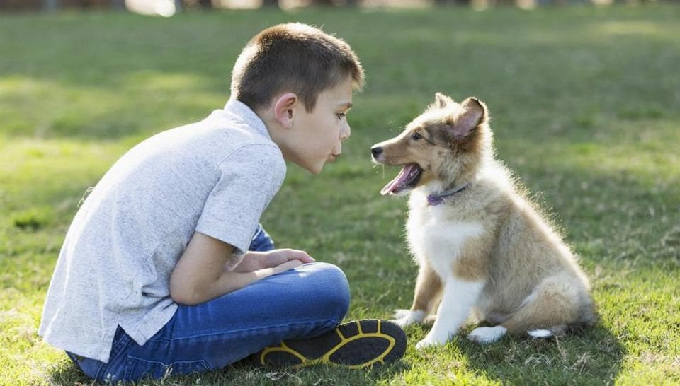 The study results showed that adult dogs were more likely to want to interact and spend time with the speaker that used dog-directed speech with dog-related content.