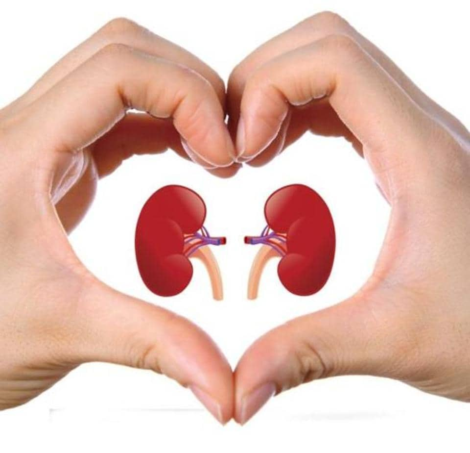 Kidney,Donors,Organ donors