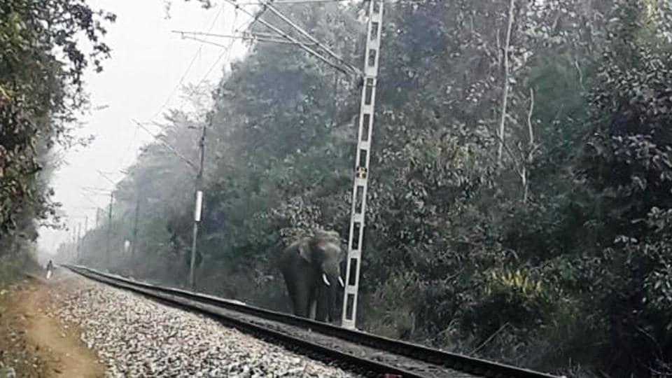 Tusker death,elephant death,Killer tracks