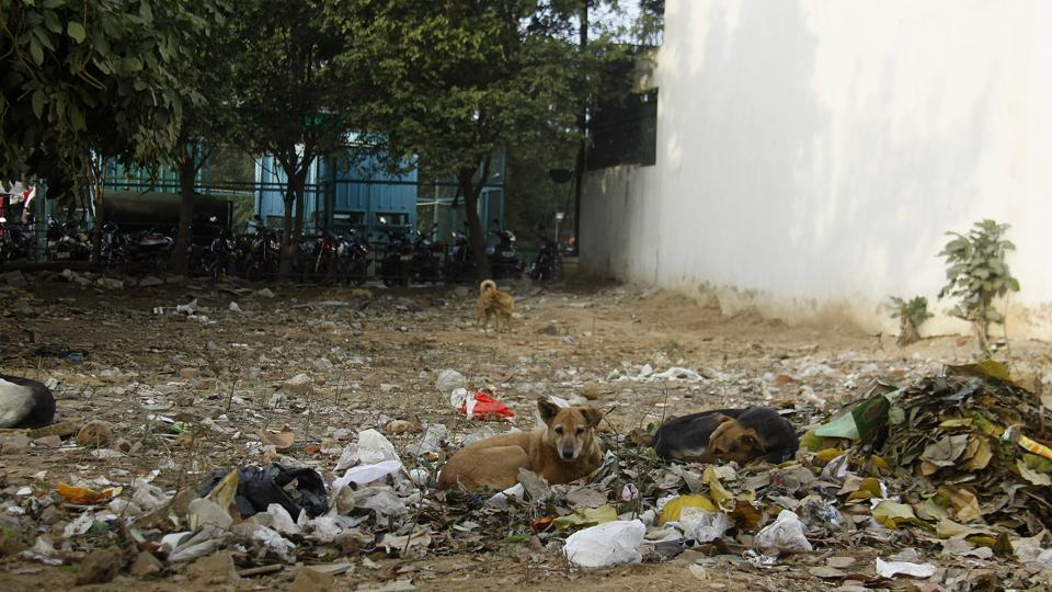 Activists said that some residents of Block E in DLF Phase-1, including the owner of a guest house, have been threatening to kill the puppies and stray dogs for past several days. These people also allegedly threatened to harm those who have been taking care of these animals.