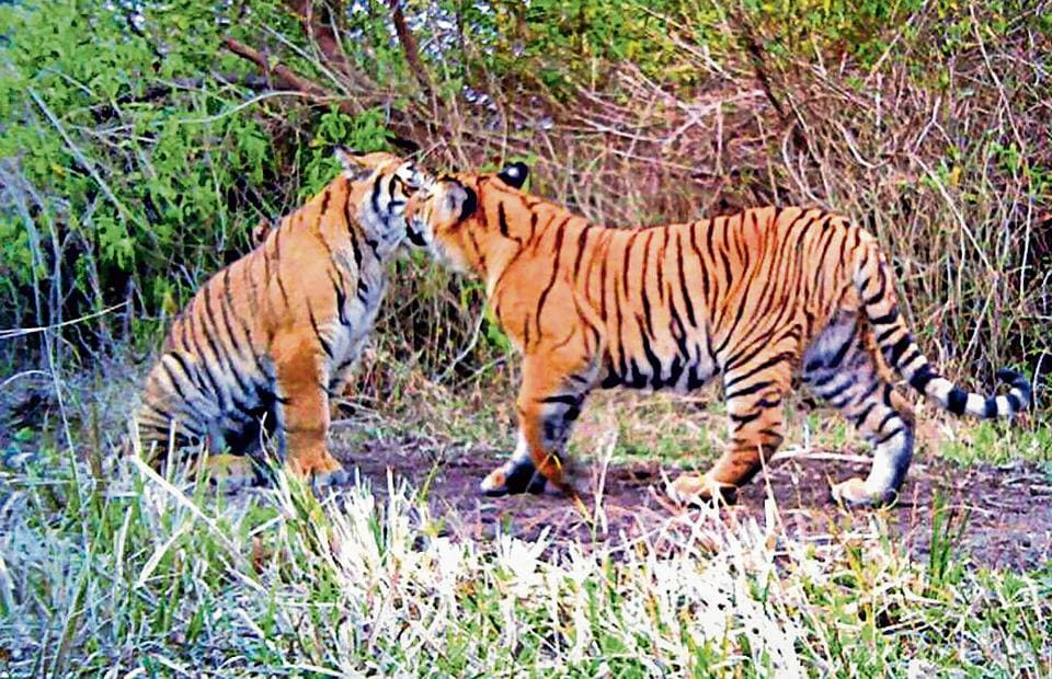 The forest minister is yet to actively take up work on helping create two more tiger reserves in Uttarakhand. At present, the mountain state has two tiger reserves – Corbett and the Rajaji.