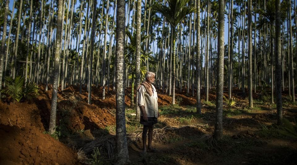 A farmer observes soil being unloaded at an areca nut farm in the village of Kuragunda in Karnataka on March 8, 2018. Encouraged by relatively good rains, better prices for crops and a state government subsidy, the inhabitants of Kuragunda are enjoying early signs of a recovery in the agricultural sector. If sustained, it could mean a turnaround from years of distress since Prime Minister Narendra Modi came to power in 2014 and bolster his re-election chances next year. (Prashanth Vishwanathan / Bloomberg)