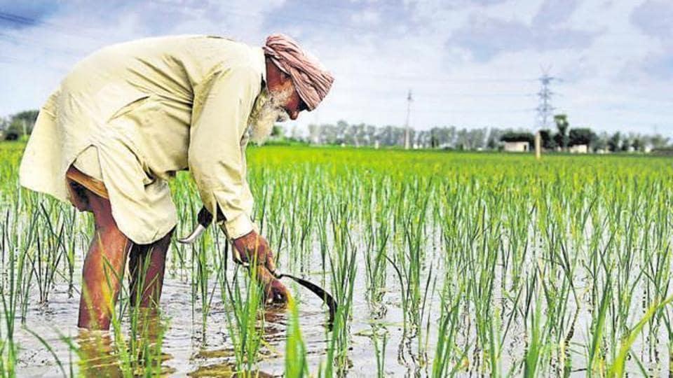 Free power to farmers,Punjab farmers,farmers in Punjab