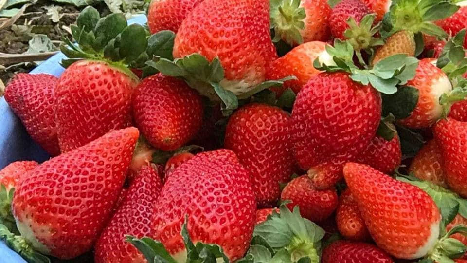 Pune,Strawberry,Inflation