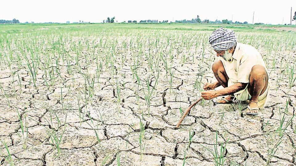 A farmer inspects his parched field.