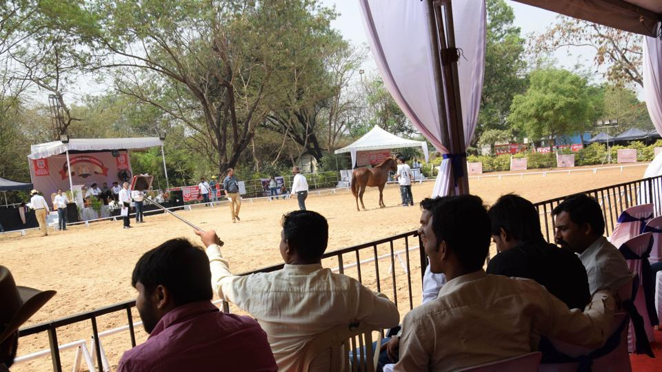 Visitors engrossed in the Marwari breed show at Talegaon in Pune.  (HT PHOTO)