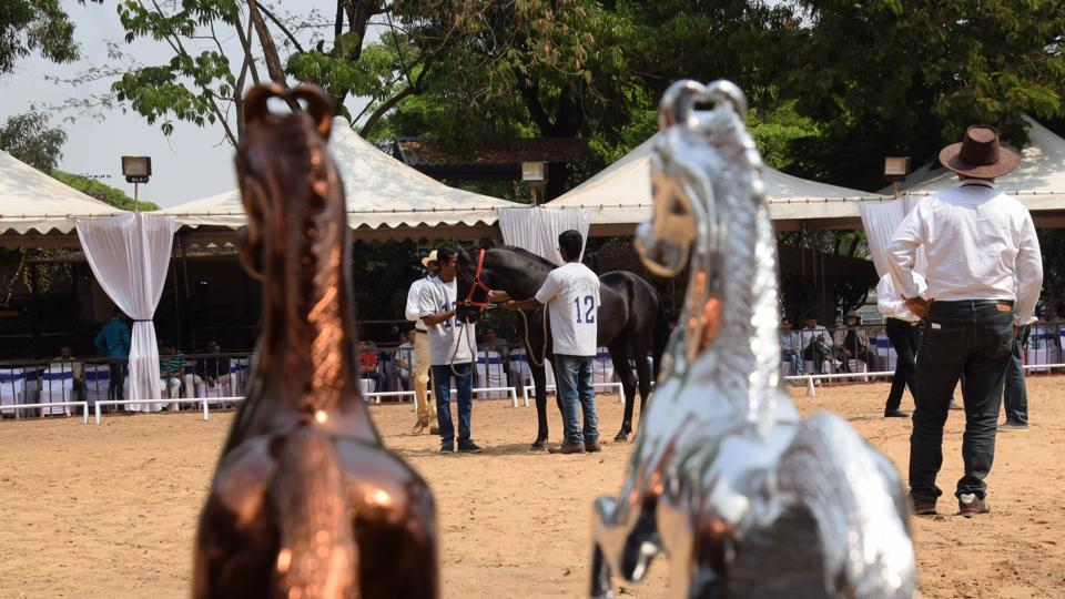 A view of the Marwari breed show at  Talegaon in Pune. (HT PHOTO )