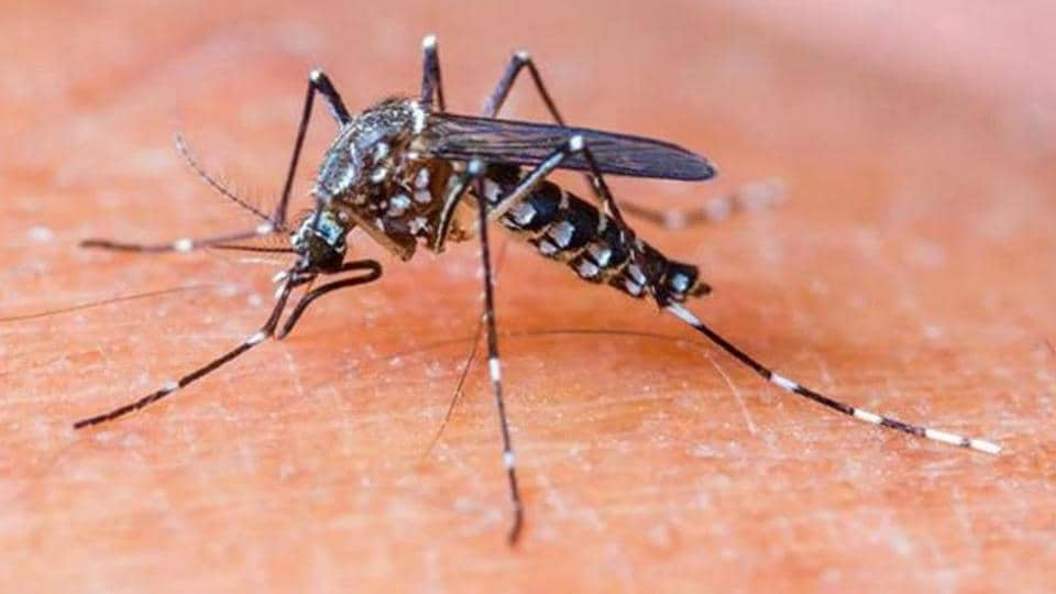 Maha records 12% of India's malaria, dengue deaths, gets less than 2% funds from Centre