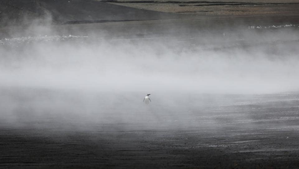 A penguin walks through the geothermal fog on Deception Island in Antarctica. Contrary to what some may think, the Antarctic is full of life. Penguins, seabirds, and different species of seals and whales can be seen at all times. (Alexandre Meneghini / REUTERS)
