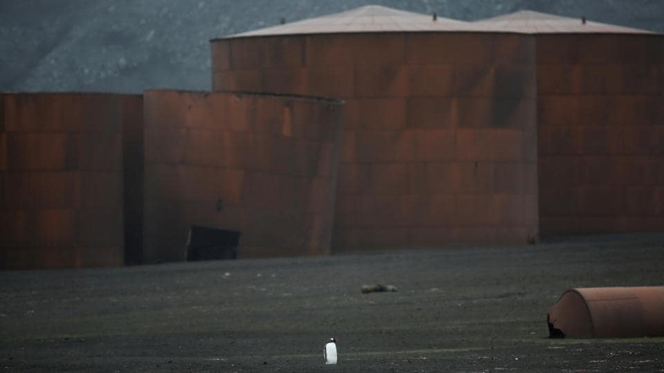 A lone penguin walks next to an old whaling factory on Deception Island. Antarctica is remote from civilization. But it is not untouched. While Greenpeace's campaign hopes to reveal some of the regions vulnerabilities, Meneghini's images hope to bring across the region's beauty. (Alexandre Meneghini / REUTERS)