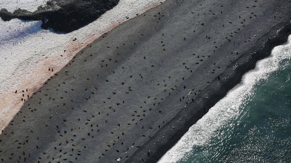 Seals lie on a beach in Half Moon Bay. Taking to the air when the weather allows reveals landscapes that Meneghini says, images do not do justice to unless seen first hand.  (Alexandre Meneghini / REUTERS)