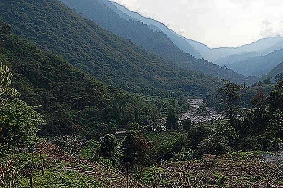Jhum cultivation in Arunachal Pradesh.