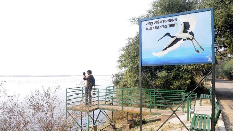 Okhla bird sanctuary,Delhi-Noida border.,Kalindi Kunj