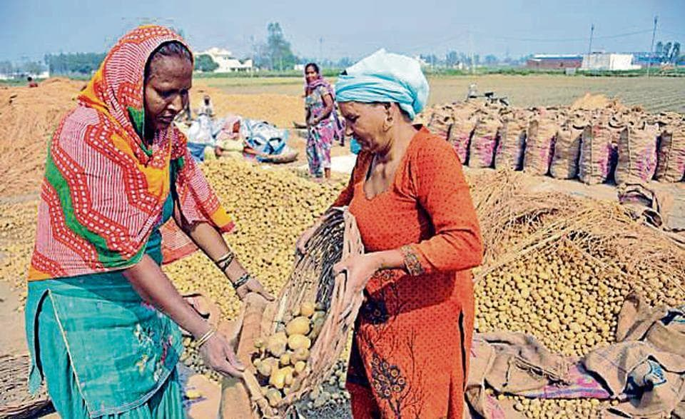 potato prices,rise in prices,Punjab farmers