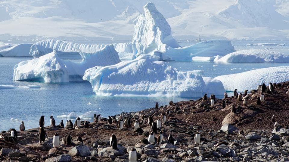 Penguins are seen on Curverville Island, Antarctica. Despite the presence of humans bundled in thick protective suits that can weigh up to 10 kgs among them, penguins do not see humans as predators and can surround visitors for hours if one does not move much. (Alexandre Meneghini / REUTERS)