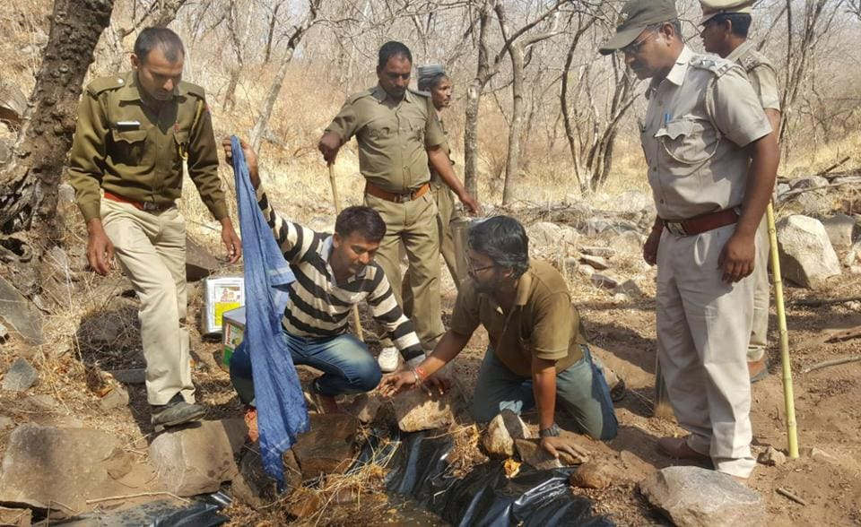 Forest officials and WII team make a temporary water body for intensive camera trapping in Sariska Tiger Reserve, Alwar.