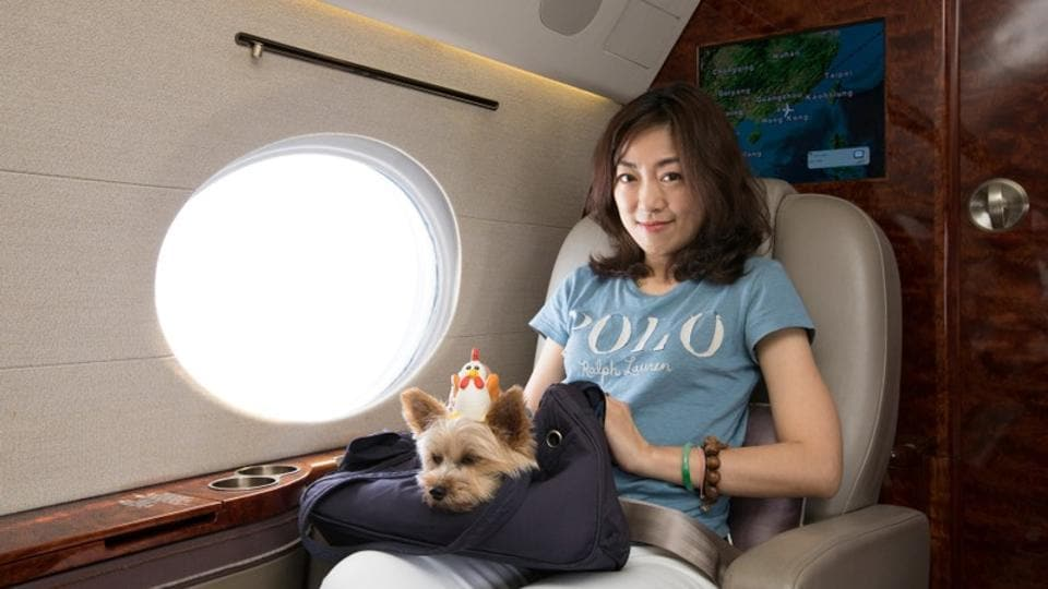 Luxury for dogs,Dogs,Luxury