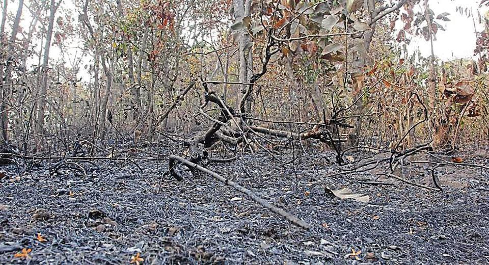 Friday's fire at Yeoor destroyed trees and covered the area with soot.