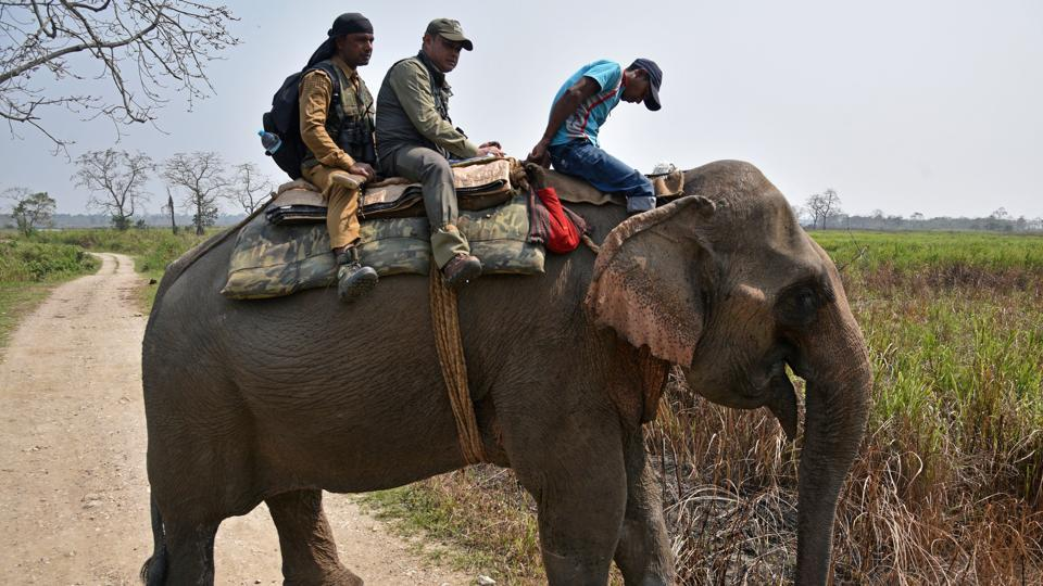 Forest officials survey on elephant back during a rhino census at the Kaziranga National Park, in Golaghat district. More than 40 elephants and 17 SUVs are being used for the exercise and the park has been categorised into 74 compartments for it. (Anuwar Hazarika / REUTERS)