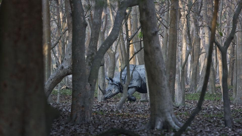 "A one-horned rhinoceros seen in the woods at the Pobitora Wildlife Sanctuary. ""The number of growth is encouraging. We have recorded presence of 102 rhinos. Apart from this, six rhinos have been killed in and around the park since 2012 and 20 of them died their natural deaths,"" a senior official at the sanctuary said. (Anupam Nath / AP)"
