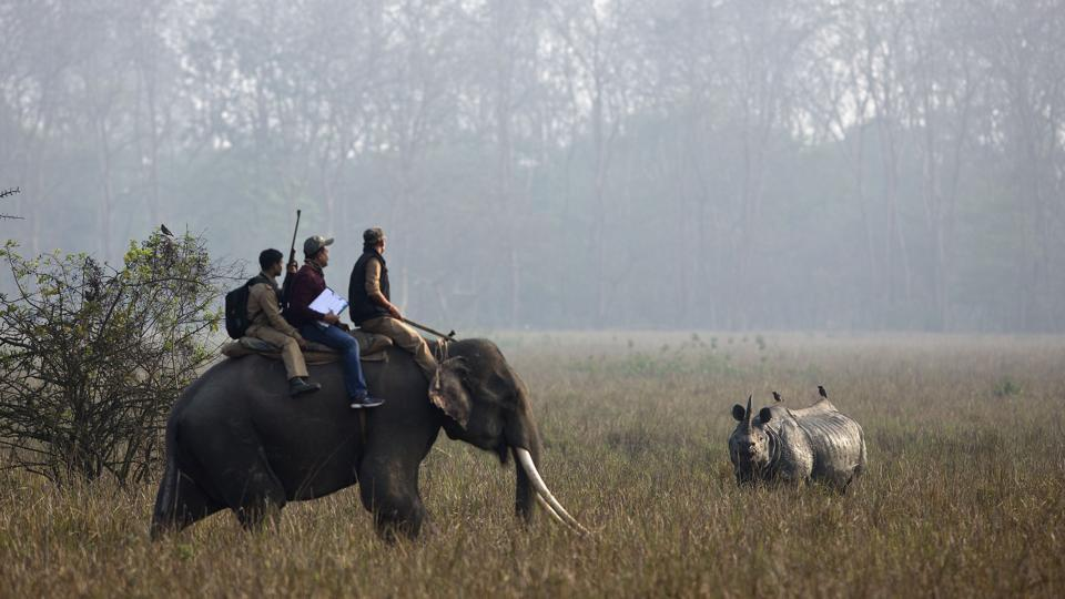 Rhino census exercises in Assam have however not been without controversy. On March 21, a group of RTI activists in the state demanded a more transparent census process, accusing the forest department of presenting inflated numbers of rhinos to match the goals of 'Rhino Vision 2020' and also deflect rising public anger against poaching. (Anupan Nath / AP)