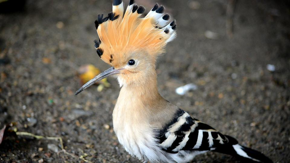 Himachal Pradesh,bird diversity,Endangered species