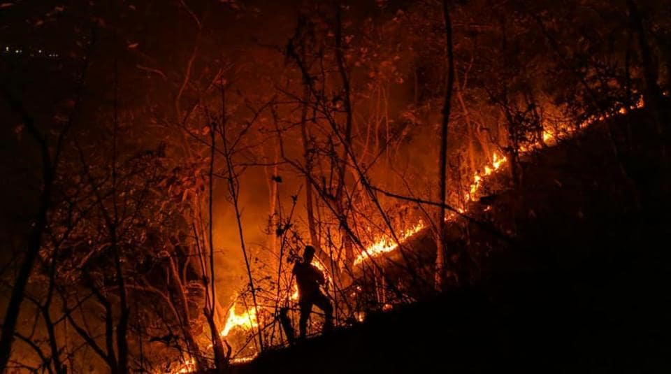 On March 13, four deliberately lit forest fires were reported from protected forest areas inside and around Sanjay Gandhi National Park in Mumbai.