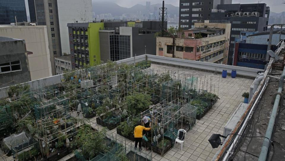 Farmers work at a rooftop vegetable garden of an industrial building in Hong Kong.