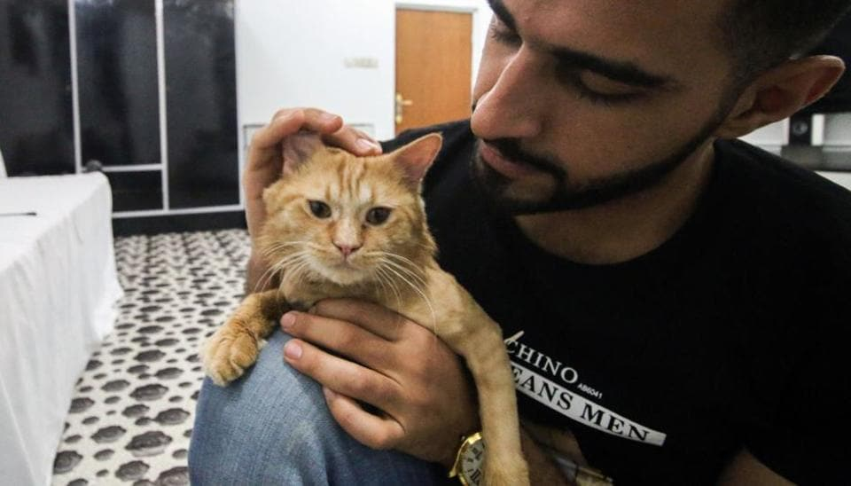Ahmad Taher, a 24-year-old senior veterinary student, attends to cats staying for short periods at the cat hotel.