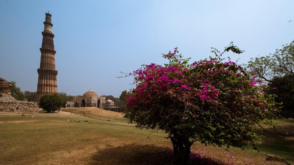 A blooming bougainvillea shrub with Qutub Minar in the background makes for a captivating image. (PHOTO: SARANG GUPTA/HT)