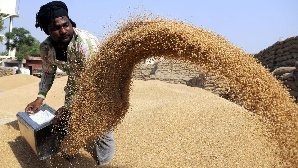 wheat procurement,Punjab govt,ESMA
