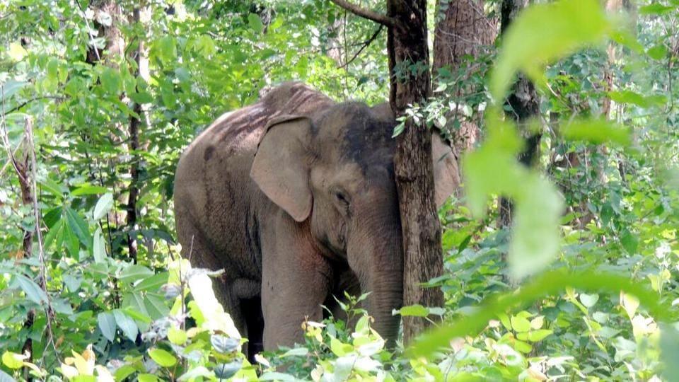 Jharkhand elephant bulletin,Jharkhand forest department,Jharkhand