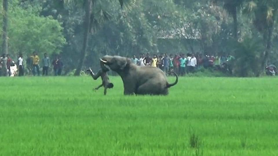 Activists allege that compilation of data on wild attack victims has been neglected since the exercise will expose the inefficiency of forest officials in tackling the conflicts.