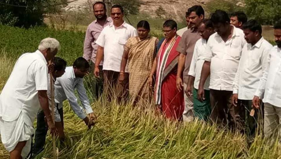 Farmers survey damaged paddy crop in Suryapet district of Telangana.
