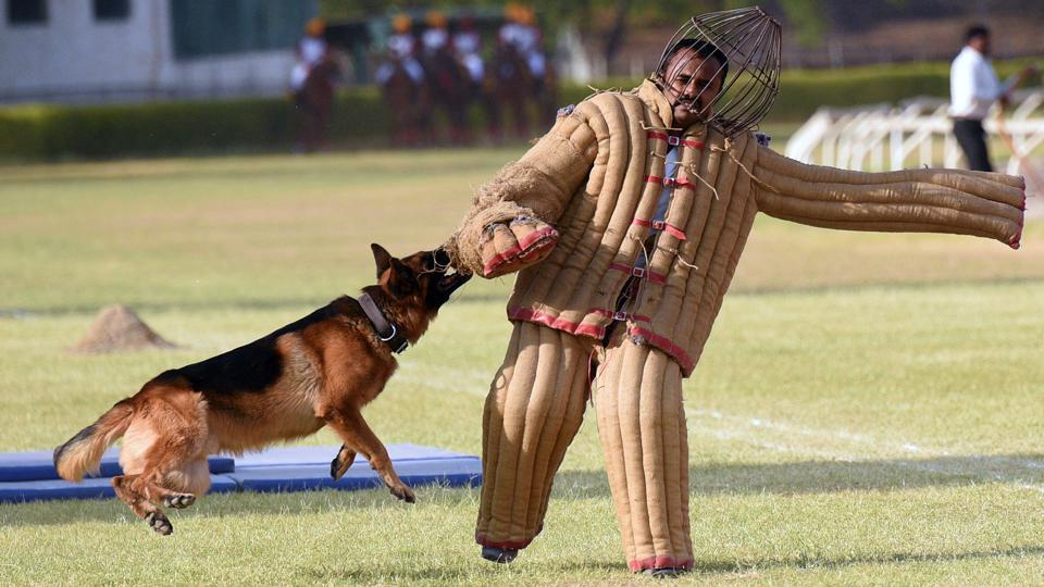A dog show during the 124th Raising Day of Southern Command Military Tattoo event at Race course in Pune on March 31. (PRATHAM GOKHALE/HT PHOTO)