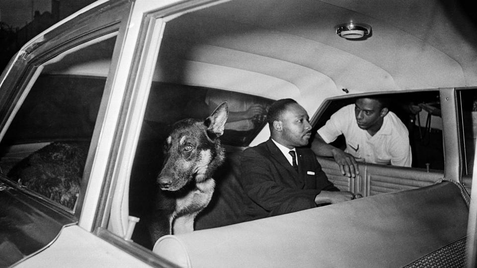 Martin Luther King Jr. speaks to Andrew Young as he rides in the back seat of a police car with a police dog, being returned to jail in St. Augustine, Florida on June 12, 1964 . King was arrested two days prior during a sit in at the Monson Motor Lodge where he challenged the segregation of patrons in the restaurant. (AP File)