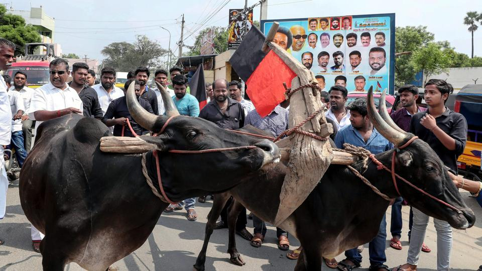 DMK members along with farmers and a pair of bulls stage a protest demanding that the Central Government constitutes a Cauvery Management Board (CMB) as per the Supreme Court direction in Coimbatore on Wednesday. (PTI)
