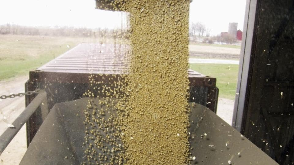 Soybeans pour into a converted consumer goods container at Elburn Coop's Maple Park, Illinois facility for export to China.