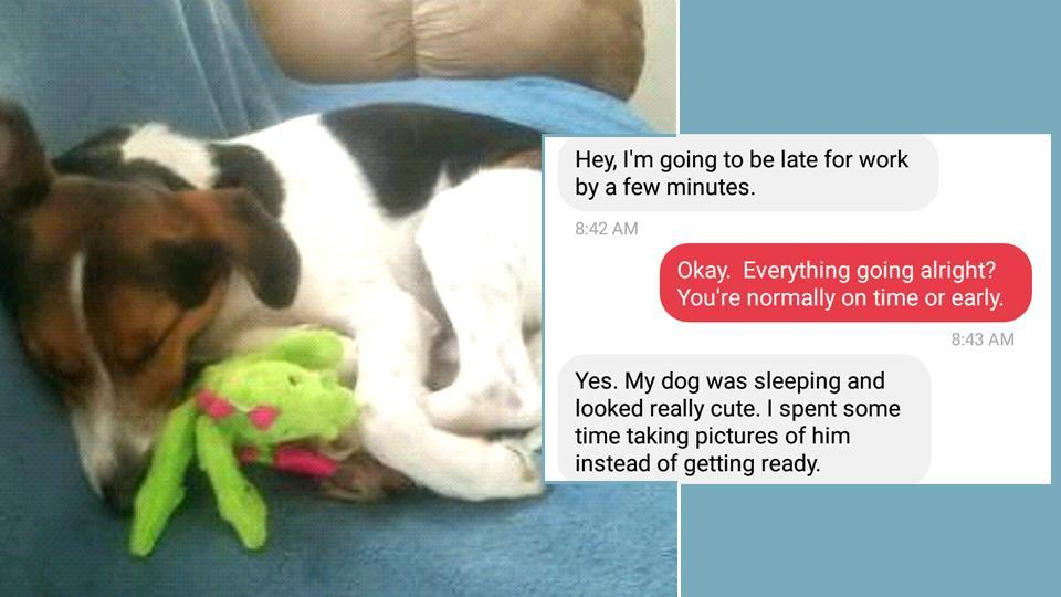 """Woman gets late to work because her dog was being """"really cute"""" (CainMolir /Imgur)"""