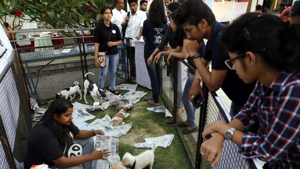Pune,PetYo,Pets