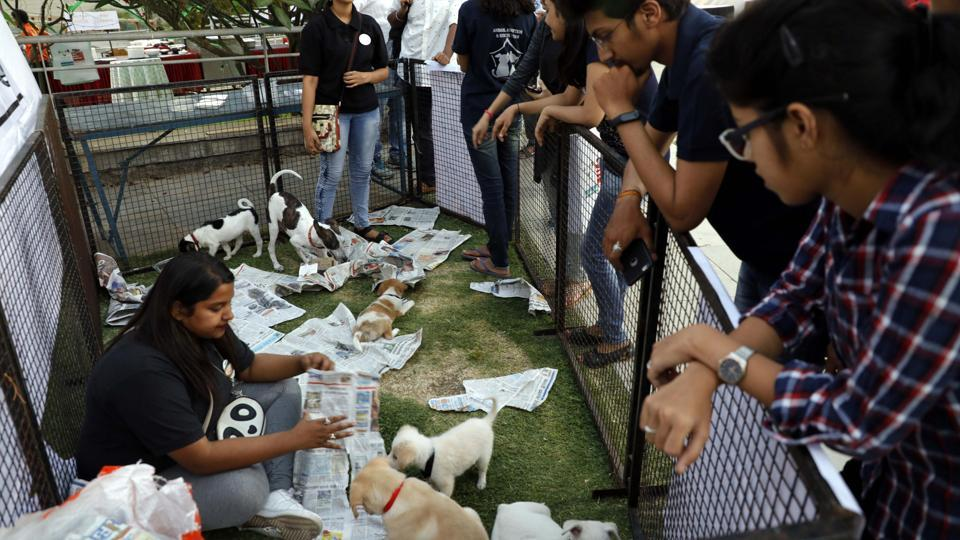 PetYo is an all­ round platform for pet ­lovers to help them through the adoption process. (RAHUL RAUT/HT PHOTO)