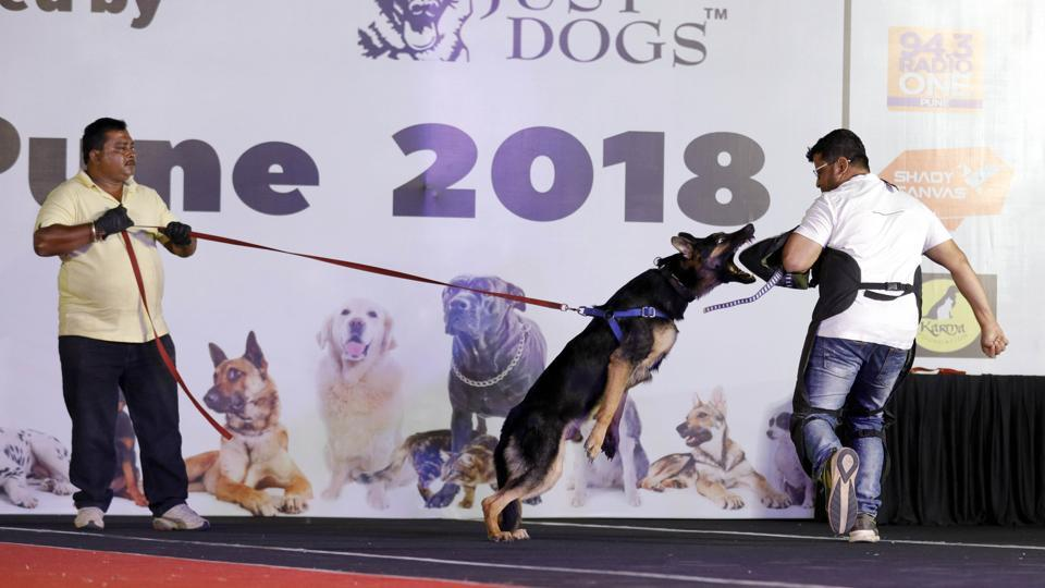 Pet owners also showed their dogs' emergency and safety skills at the PetYo festival Pune 2018 at Amanora Club House in Pune on April 8. (RAHUL RAUT/HT PHOTO)