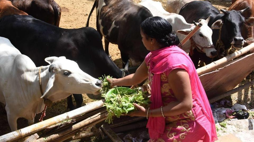 India on Friday banned imports of the hormone oxytocin to stop its misuse in the livestock industry.