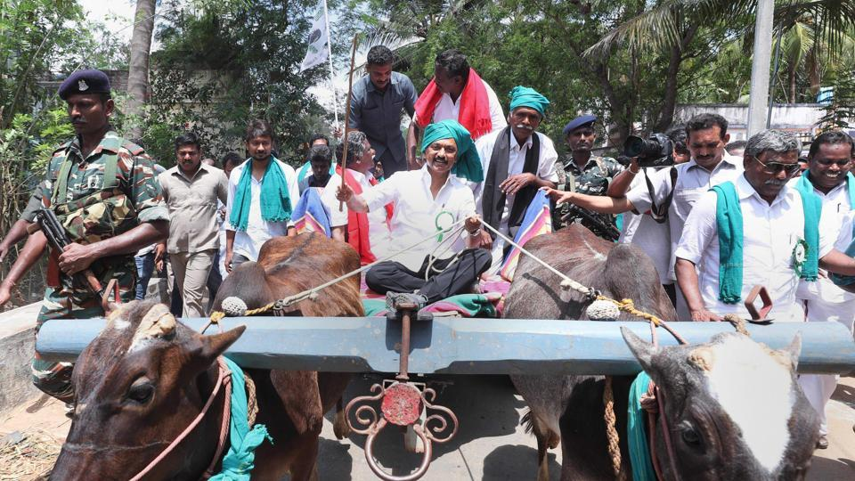 DMK leader MK Stalin rides a bullock cart during a rally, which covers the Cauvery basin region of Tamil Nadu, seeking immediate constitution of a Cauvery Management Board, in Thiruvarur on Tuesday.