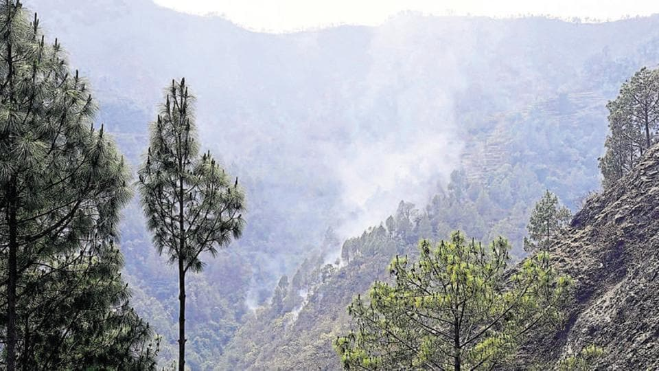 Mumbai,forest,forest conservation