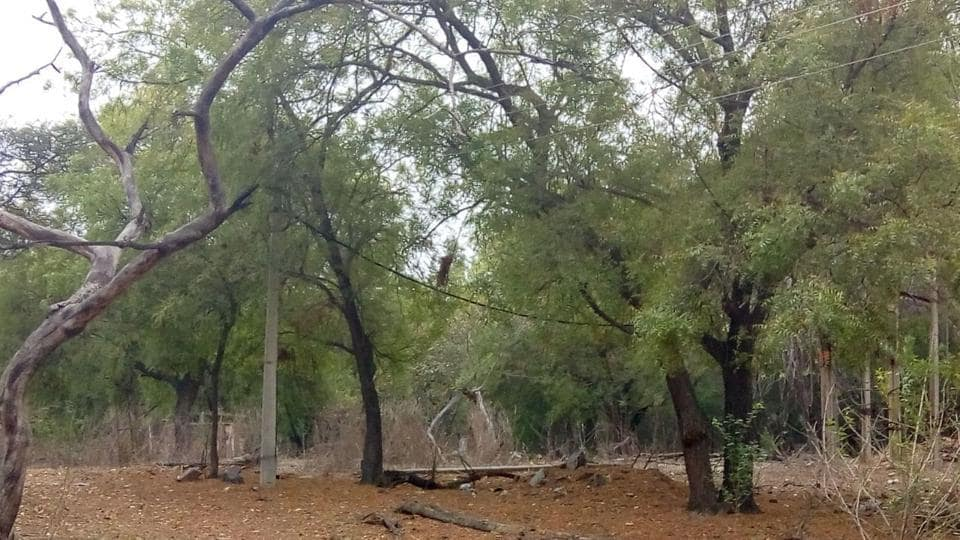 The new animal treatment centre will be built on three acres of land behind the Sultanpur rest house.