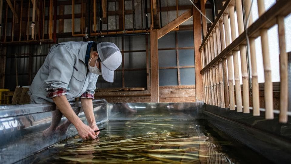 Taiki Ichimura, scrapes soaked kozo bark to remove grit and impurities during the paper-making process. Washi making, an intricate art is usually done in the winter months and uses cold water to contract the plant fibers, making for crisper paper. (Carl Court / Getty Images)