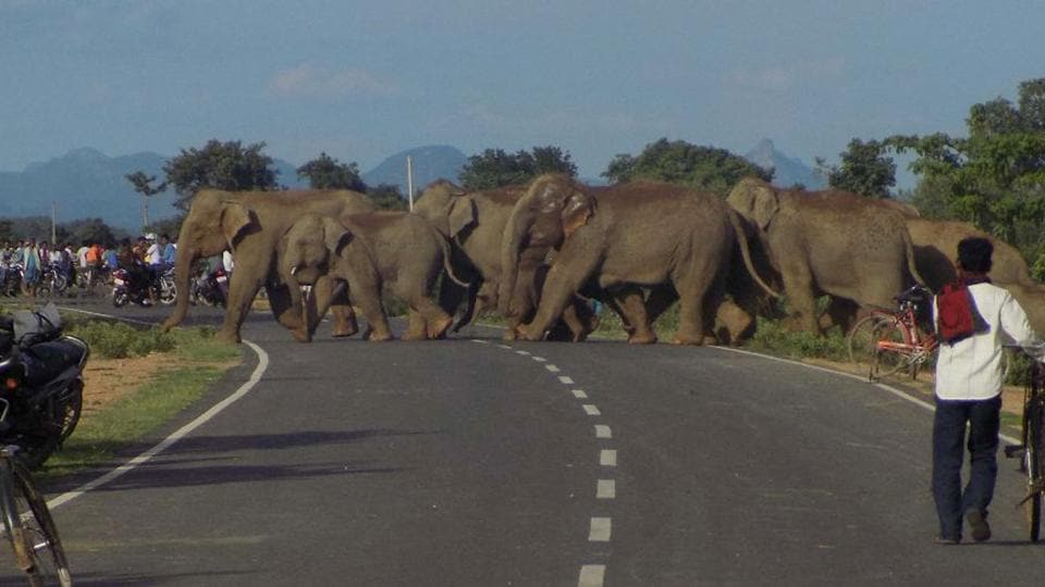 File photo of a herd of wild elephants crossing a road at Sonahatu in Ranchi.