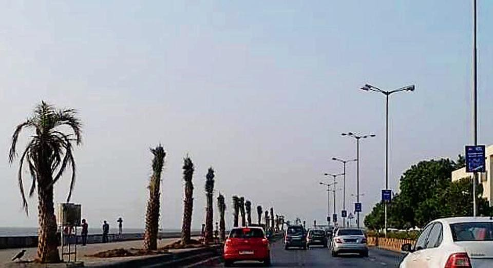 Date palm trees dotting the Worli sea face.
